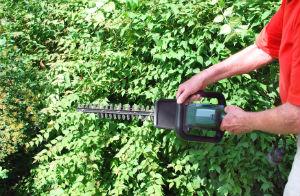 hedge-trimming-acton